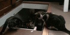 """""""Lemme help......""""  Click to see the GIF."""
