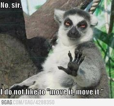 move it!