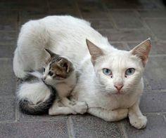 Mommy lovely!