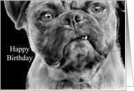 Happy Birthday Humor Smug Pug Dog Pencil and Oil Painting Card by Greeting Card Universe. $3.00. 5 x 7 inch premium quality folded paper greeting card. Greeting Card Universe offers the largest selection of birthday cards on the web. Make your loved ones feel special with a custom paper card. Send a paper birthday card from Greeting Card Universe this year. This paper card includes the following themes: birthday, happy birthday, and humorous birthday. Getting Older card...
