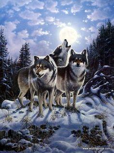 Wildlife Artist Derk Hansen Unframed Wolf Art Print Midnight Watcher   WildlifePrints.com