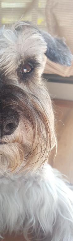 BICHON FRISE PAINTED PORTRAIT DOG PUPPY ENAMEL ITALIAN CHARM 9MM CLASSIC DIY NEW