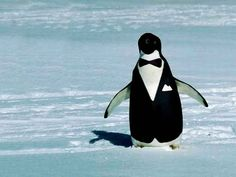 22 Reasons Why Penguins Are Hands Down The Best Animals On Earth