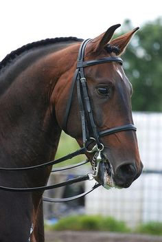 Working Equitation at Arley - Lusitano III by Sarah Clegg on Flickr.