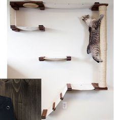 CatastrophiCreations Cat Mod Climb Track - Multiple-level Cat Hammock and Climbing Activity Center - Handcrafted Wall-mounted Cat Tree Shelves -- For more information, visit image link. (This is an affiliate link and I receive a commission for the sales) Tree Shelf, Cat Activity, Cat Perch, Cat Hammock, Cat Shelves, Cat Playground, Playground Design, Cat Climbing, Cat Scratcher