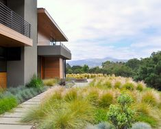 grasses and concrete