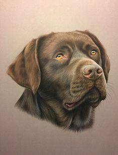 Portrait de labrador chocolat réalisé au pastel d'aprés photo