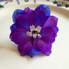 delphinium blue purple. I'd like a watercolor of this similar to some of the rose watercolors I've seen