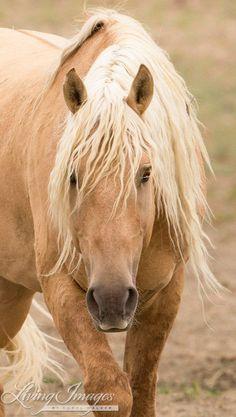 Corona Comes Close - Fine Art Wild Horse Photograph by WildHoofbeats