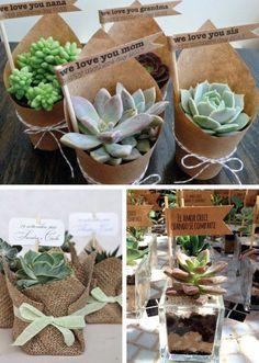 souvenirs-con-cactus-y-suculentas.jpg (600×842)