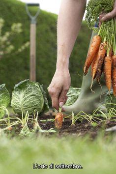 Settembre segna il passaggio dall'estate all'autunno: bisogna dare particolari attenzioni alla cura dell'orto! Cosa si può seminare in questo mese? In pieno campo: cavolo verza, rucola, indivia, lattughino da taglio, spinaci, ravanelli, prezzemolo, radicchio, scarola. In semenzaio: rape, carote, cipolle, cime di rapa e bietole. Nei vasi in terrazzo: prezzemolo, carote, lattughino da taglio, rucola, ravanelli e spinaci.  #orto #settembre #autunno