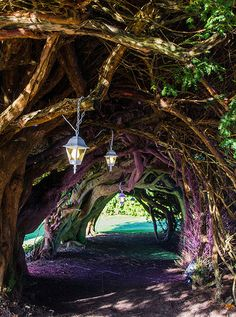 Yew Tunnel at Aberglasney Gardens.  Cute idea for leading in to a club house.