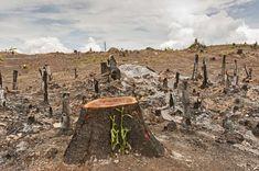 OBJETIVO 13: AÇÃO CLIMÁTICA Área desmatada13 - yotrak/Getty Images