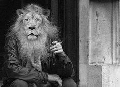 Mr Lion wants a smoke break