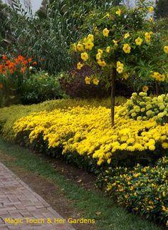 Yellow Brick Road at Longwood Gardens