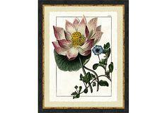 Ebony Wood Framed Botanical Print II