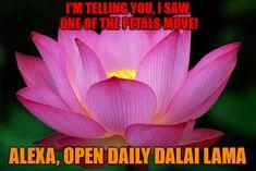 The Lotus Flower beautiful Feeling Lost, How Are You Feeling, Reiki Principles, Alexa Skills, Reiki Meditation, This Is Love, Just Smile, Dalai Lama, Loving Someone