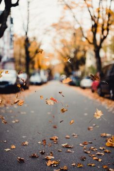 Oct 2019 - the most beautiful season. See more ideas about Autumn, Autumn inspiration and Autumn aesthetic. Dslr Background Images, Photo Background Images, Photo Backgrounds, Fall Background, Autumn Day, Autumn Leaves, Hello Autumn, Photo Hacks, Photo Ideas