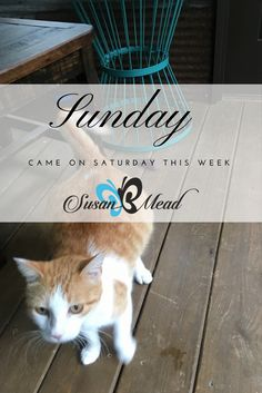 Sunday Came on Saturday Expect multiplied miracles when Sunday comes on Saturday! https://susanbmead.com/sunday-saturday/