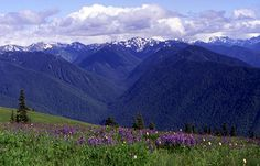 """Hurricane Ridge, Olympic National Park Reminds me of """" The Sound Of Music"""""""