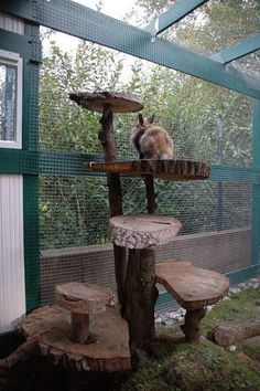 First-Rate Wood Working Rustic Ideas House rabbits can live in rabbit hutches, rabbit cages indoors and out.House rabbits can live in rabbit hutches, rabbit cages indoors and out. Rabbit Cages, Bunny Cages, House Rabbit, Rabbit Toys, Diy Bunny Cage, Rabbit Garden, Guinea Pig Hutch, Bunny Hutch, Rabbit Pen