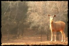 Born to be wild !! (Ranthambore National Park, Dec 2011)