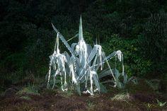 Inka & Niclas | Becoming Wilderness V, 2013