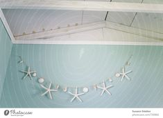 Search Photocase for starfish and find 228 royalty-free images