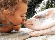 American Mini Pig Association was created to educate, advocate, protect miniature pigs, improve breeding practices. Pet Pigs, Guinea Pigs, Animals For Kids, Farm Animals, Hampshire Pig, Miniature Pigs, Pot Belly Pigs, Teacup Pigs, Showing Livestock