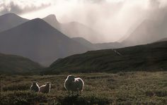 Dovrefjell | Flickr - Photo Sharing!