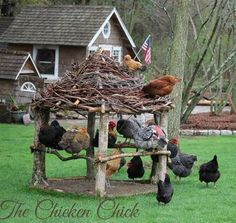 Great idea for the hens when they are free ranging!