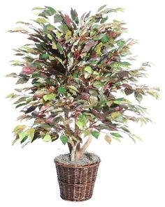 4' Artificial Potted Extra Full Mystic Ficus Tree in Brown Pot -- Want additional info? Click on the image.