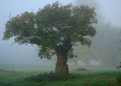 The Faraway Tree, Oxfordshire,UK