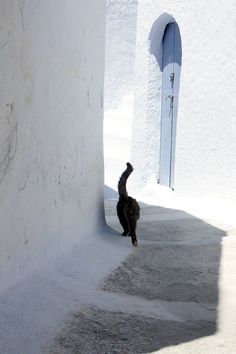 Amazing Contrast...Black Cat walking through the white-washed streets of Santorini, Greece