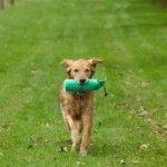 Training Puppies to Retrieve