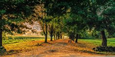 """apple orchard way"" DEWarwick photography"