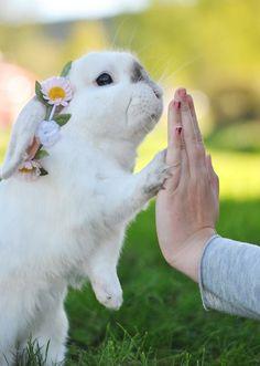 Bunny high five!
