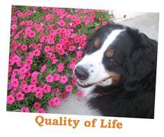 Canine Lymphoma  Lymphoma in Dogs Robyn Elmslie, DVM DACVIM (Oncology) Kim Statham-Ringen, DVM DACVIM (Oncology) Veterinary Cancer Specialists Veterinary Referral Center of Colorado