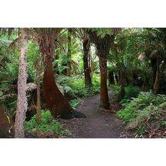 Rain forest near the Great Ocean Road exit Marriners Falls VIC Australia (Great Otway National Park). . . #photogrid #canon #canonfans #photographer #canonnederland #exclusive_shots #victoria  #exclusive_nature #world #dutch_connextion #gtaround #bestshotz_pro #marrinerfalls #iloveaustralia #capeotway #apollobay #rainforest #bestshotz_australia #gtaround  #greatoceanroad #exclusive_world #nature  #exclusive_shots #igersbestshot #canonsydney by donp2000 http://ift.tt/1LQi8GE