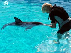 Winter the dolphin's story of survival has inspired millions of people. She has become an ambassador for rescue & rehab work at Clearwater Marine Aquarium. Shelter Dogs, Animal Shelter, Rescue Dogs, Chihuahua Dogs, Pet Dogs, Dogs And Puppies, Dolphin Tale 2, Dolphin Trainer, Terrier Mix