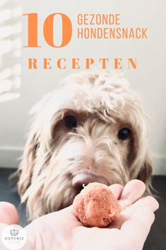 DIY dog cookies and dog treats that are easy and healthy Diy Dog Treats, Dog Treat Recipes, Dog Food Recipes, Snack Recipes, Dog Collars & Leashes, Dog Leash, Bordeaux Dog, Make Dog Food, Dog Cookies