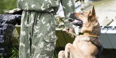 Tell the US To Stop Classifying Military Dogs As 'Equipment' & Leaving them Behind!