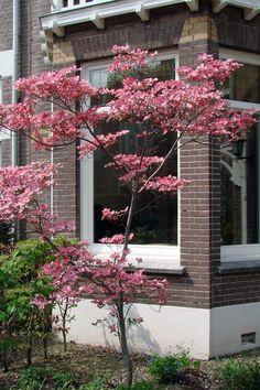 Outside Living, Go Outside, Outdoor Living, Shade Garden, Garden Plants, Small Gardens, Outdoor Gardens, Balcony Garden, Green Flowers