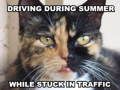 Rock the drivers burn like it's the new farmers tan! Driving Memes, Farmers Tan, Dumb And Dumber, Rock, Cats, Funny, Holiday, Animals, Style