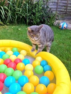 And this cat who's maybe about to make a huge mistake. | 19 Delightful Animals Cooling Off In Paddling Pools