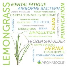 Essential Oil Spotlight: Lemongrass Lemongrass essential oil is steam-distilled from the leaves of the Cymbopogon flexuosus. Its lemony, earthy aroma may promote awareness and purification. Historically, lemongrass has been used for … Essential Oils Guide, Doterra Essential Oils, Essential Oil Diffuser, Essential Oil Blends, Yl Oils, Baby Massage, Young Living Oils, Young Living Essential Oils, Arthritis