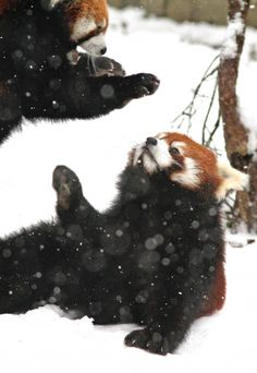 """""""Uh oh, are you really gonna get me???"""" 