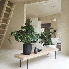plant & plywood