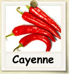How to Grow Cayenne Pepper | Guide to Growing Cayenne Peppers