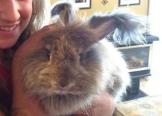 German Angora. Learn how to care for angora rabbits at http://www.industriousfamily.com/caring-for-angoras.html